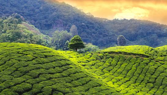 Tea Board of India appoints Deloitte to boost consumption